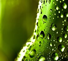 Water drops on a beer bottle by Jérôme Le Dorze