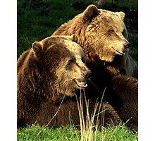 Bear pair Photographic Print