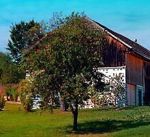 The tree and the farm by Patrick Jobst
