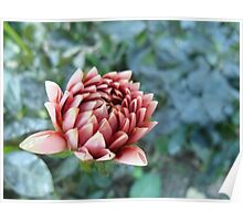dahlia at its best Poster