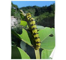 Colourful tropical Eruca Poster