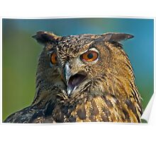 SCREECH, SCREECH SAID THE EAGLE OWL Poster