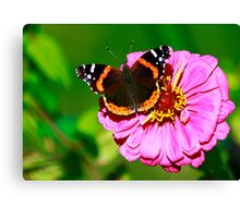 Red Admiral Canvas Print
