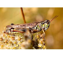 Hopper 1 Photographic Print