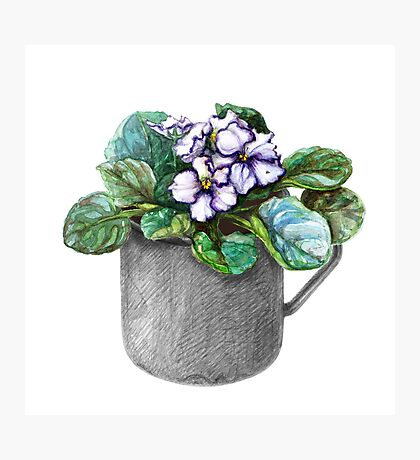 Mug with violets Photographic Print