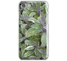 "Foliage of Sage (Salvia Officinalis) ""Tricolor"" for iPhone iPhone Case/Skin"