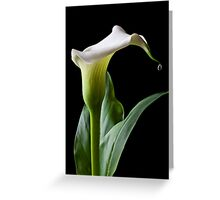 Calla lily with drip Greeting Card