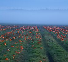 Harvest Time by aquinnahimages