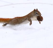 Red Squirrel - Moving the Goods by Alinka
