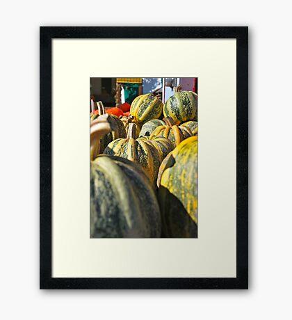 Pumpkin Green Framed Print