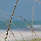 beach grass...the sea and me... by aspectsoftmk
