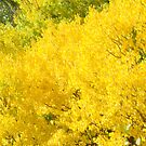 Golden Aspen by Kathleen Struckle
