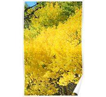 Golden Aspen Poster