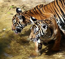 Malayan Tiger Cubs by Gail Falcon
