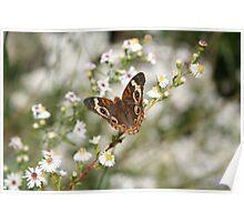 Autumn Wings - Common Buckeye 3 Poster