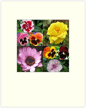 Sunkissed Summer Flowers Collage - Unframed by BlueMoonRose