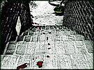 The Trail of Murder by Scott Mitchell