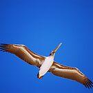 Flying Model by loiteke