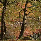 Autumn at Killiam's Lake by Debbie  Roberts