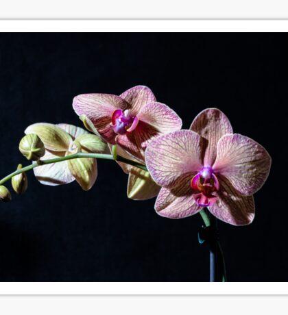 Orchids 1 Sticker