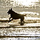 The S's have it in this......Sparkling, Sunset, Splash! by Helen Vercoe