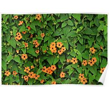 Orange Flowers on a Green Plant Poster