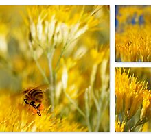 HONEY BEE COLLAGE by Betsy  Seeton