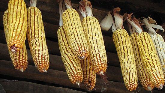 Corn 2011 - Two by branko stanic