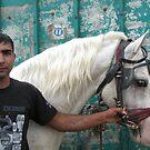 Horse Dealer - Five by branko stanic