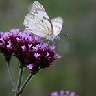 Cabbage White by KAt-dan-Painter