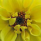 Sunny Days Dahlia by Keri Harrish