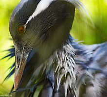 Grooming Bird by Puttknob1