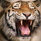 Miaaow!! by Franco De Luca Calce