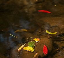 Leaves in a Stream by Margaret Hamwood