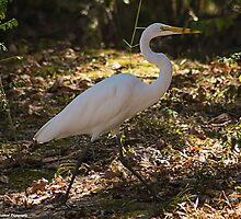 Egret by Puttknob1