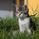 Sweet Kitten by Paul Murray