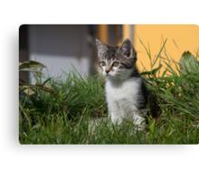 Sweet Kitten Canvas Print