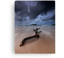Fingal Heads Driftwood - Fingal Heads - Northern NSW - Australia Canvas Print