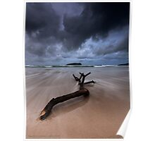 Fingal Heads Driftwood - Fingal Heads - Northern NSW - Australia Poster