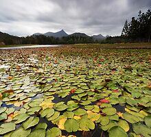 Clarrie Hall Dam - Northern NSW - Australia by Soren Martensen