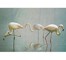 Flamingo Mist Photographic Print
