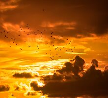 flocks of starlings flying into a sunset by morrbyte