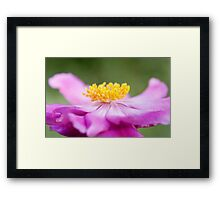 Anemone Flower Close Up Framed Print