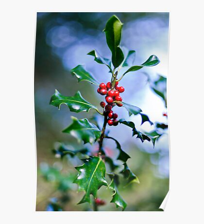 Holly Sprig, JFK Arboretum, New Ross, County Wexford Poster