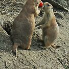 sharing tomato:) by LisaBeth