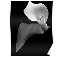 Monotone Bloom Poster
