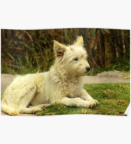 White Shaggy Dog Poster