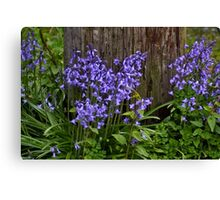 basic bluebells Canvas Print