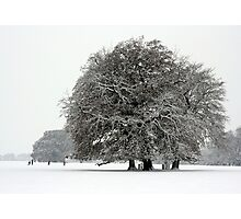 Winter in Petworth Park Photographic Print