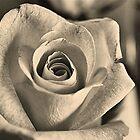 Graceful Rose by Keri Harrish